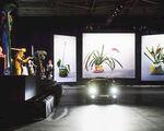 Coronaproof Boijmans Ahoy drive-thru museum succesvol en schadevrij afgesloten