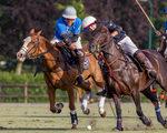 Waalre Polo beste polosport-event in de Benelux