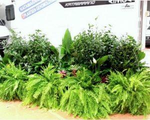 Plantenverhuur Van de Velde neemt Euroflower over