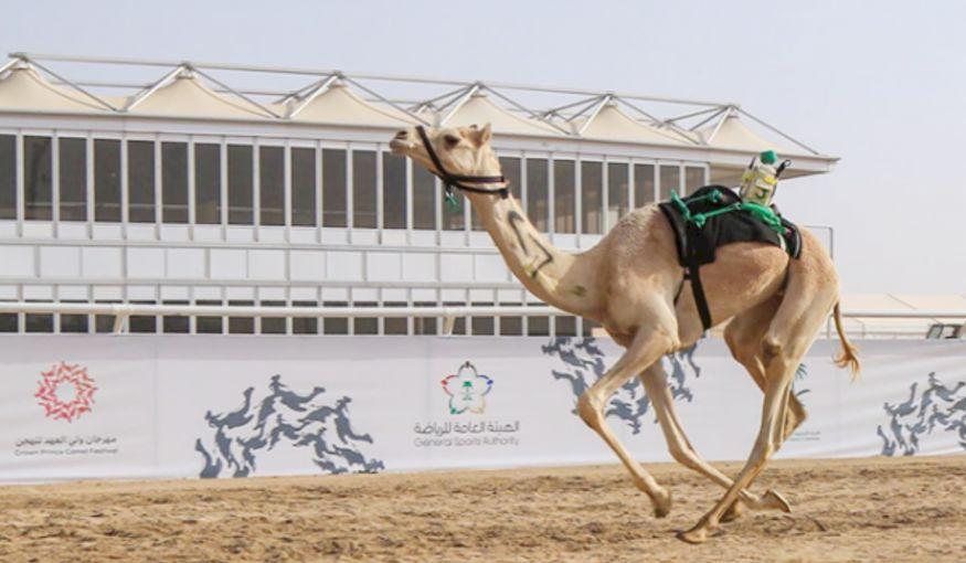 Grootste kameelfestival ter wereld breekt Guinness Wereldrecord