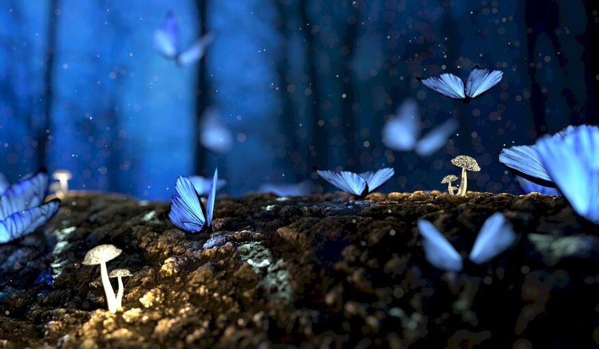 Bekijk het aanbod van het magische Sprookjes nv